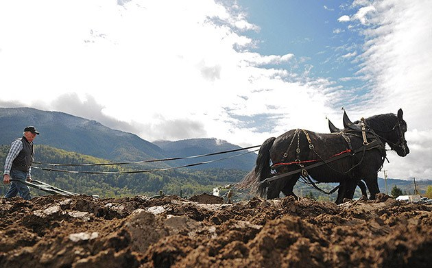 Dennis Ryan competes in the 93rd annual Chilliwack Plowing Match in Rosedale on April 11