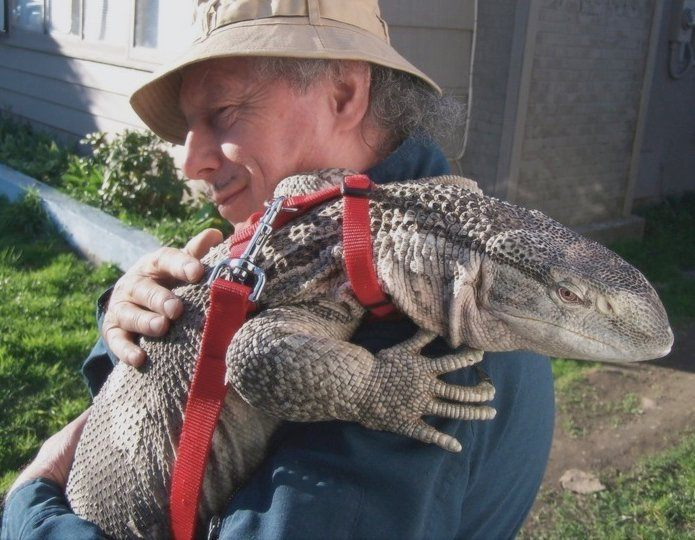 Jozef Demcak with his black-throated monitor lizard
