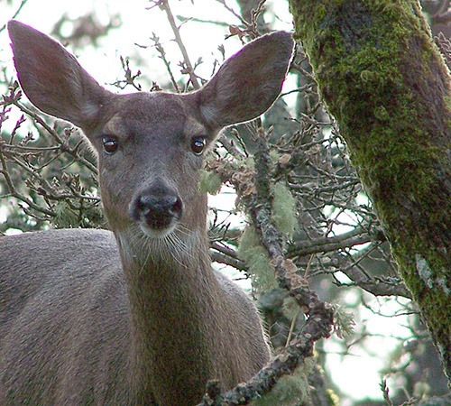 A new website makes it easier to report wildlife encounters.