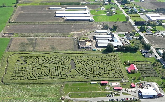 The Chilliwack Corn Maze is honouring the memory of Terry Fox and celebrating the 35th anniversary of the Marathon of Hope this year. They're holding a fundraiser for the Terry Fox Foundation this Saturday