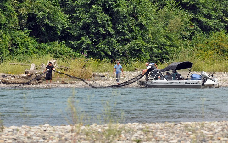 Beach seiners haul in their net and prepare to move downstream after fishing on the Vedder River near the end of Wilson Road in Yarrow on Tuesday afternoon.