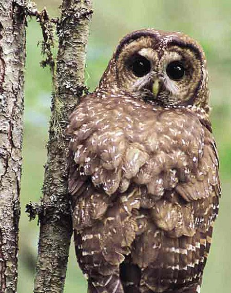 'It was a protected area for the spotted owl
