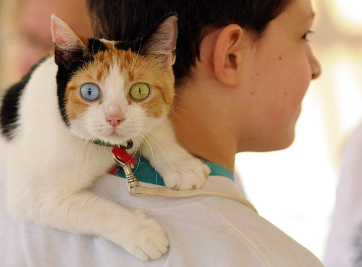 Ocean the cat stares wide-eyed while perched on owner Matthew Meir's shoulders as they take part in the 'oddest pet' category of the annual Pet Parade at the Chilliwack Library on Wednesday morning.