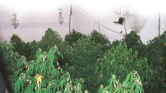 Marijuana grow op.