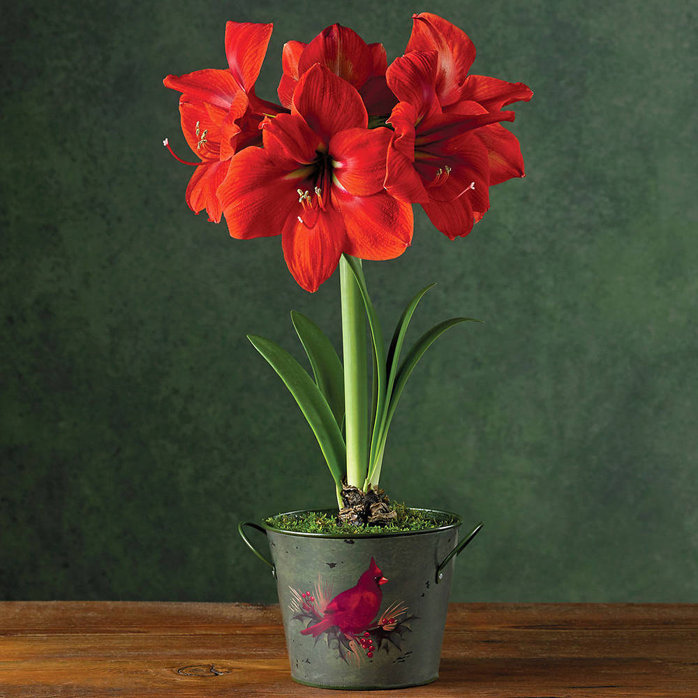 bring the beauty of the bulb indoors