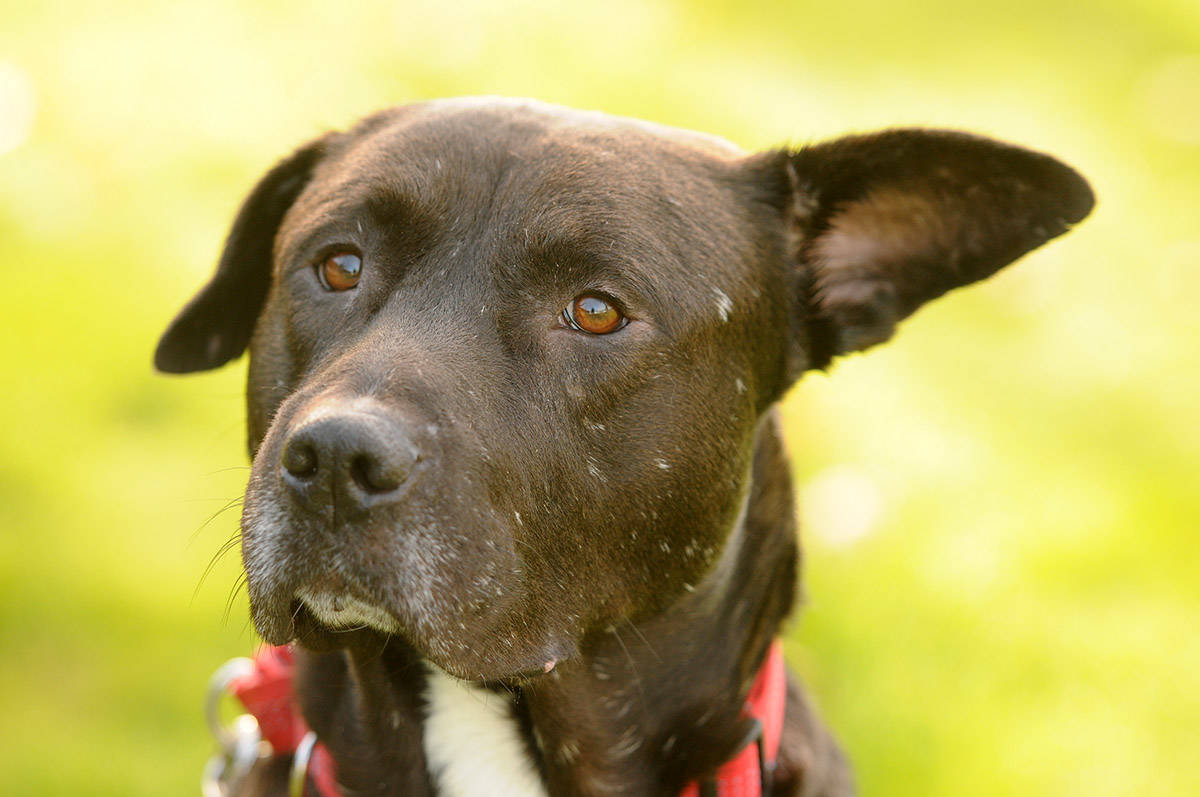 VIDEO: Find Me My Furever Home – Smokey at the Chilliwack SPCA