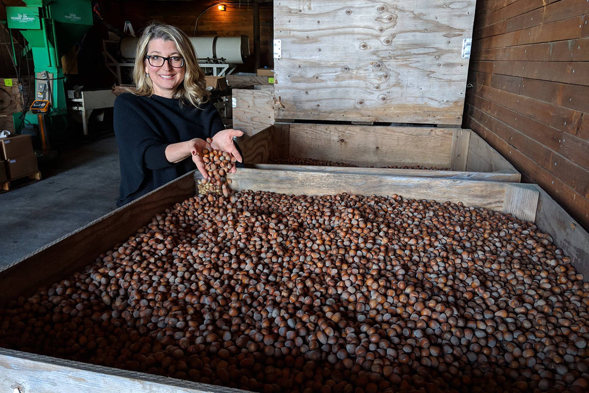 Reviving the hazelnut industry in the Eastern Fraser Valley