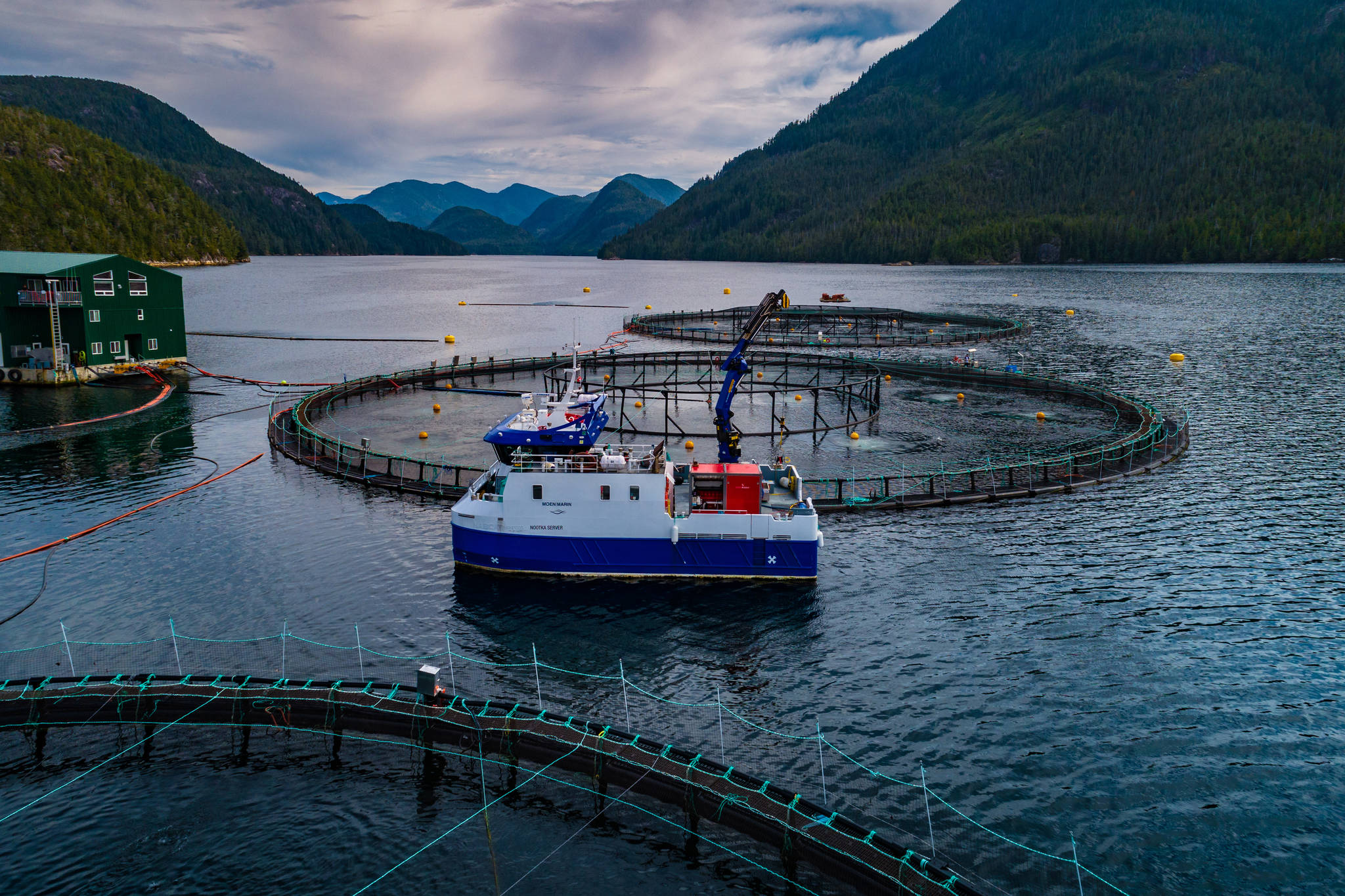 Nineteen salmon farms in the Discovery Islands have been given 18 months to vacate, causing shock and uncertainty in the industry. (Photo courtesy Grieg Seafood BC)