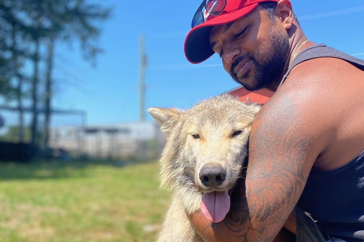Brendan Sandhu cuddles one of the male wolf-dog hybrids he recently helped rescue in the Hope and Chilliwack area. (Submitted by Brendan Sandhu)