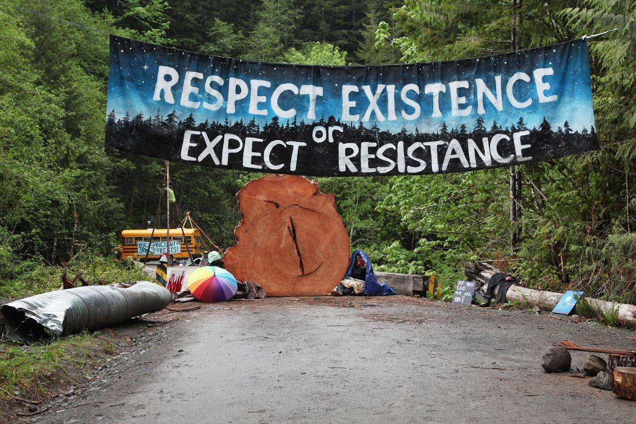 Protesters sit chained to a tree stump at an anti-old-growth logging blockade in Caycuse, B.C. on Tuesday, May 18, 2021. THE CANADIAN PRESS/Jen Osborne