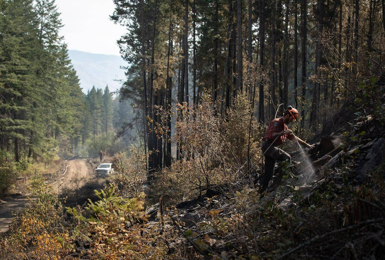 Wildland firefighter Ty Feldinger works on steep terrain to put out hot spots remaining from a controlled burn the BC Wildfire Service conducted to help contain the White Rock Lake wildfire on Okanagan Indian Band land, northwest of Vernon, B.C., Aug. 25. (Darryl Dyck/Canadian Press)