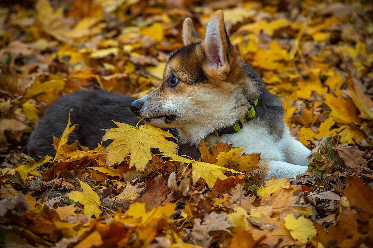 Certain items we use in the fall can be toxic to pets. (Elena Rogulina/Pixabay)