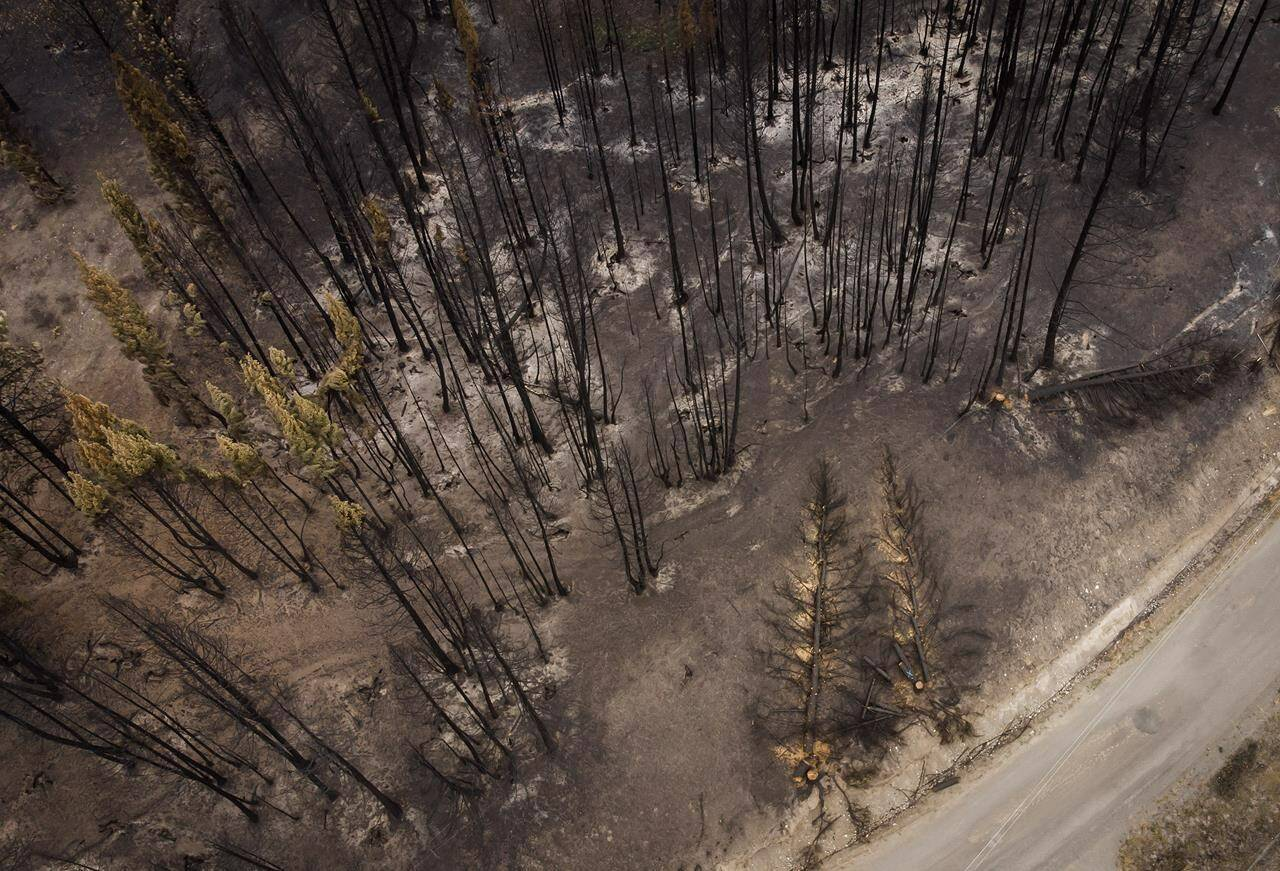 Trees burnt by the White Rock Lake wildfire earlier this month are seen in Monte Lake, B.C., on Thursday, Aug. 26, 2021. THE CANADIAN PRESS/Darryl Dyck