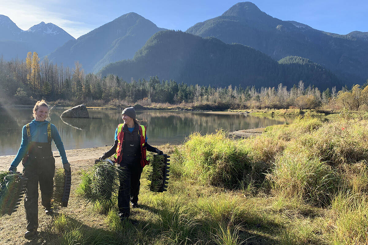 The Fraser Valley Watersheds Coalition planted 3,600 native species plants along the edges of Starrett Pond at the Tom Berry Gravel Pit site in November 2019. It's part of a multi-year restoration project focused on connecting waterways in the area to stop salmon from dying there. (Jessica Peters/ Hope Standard file)