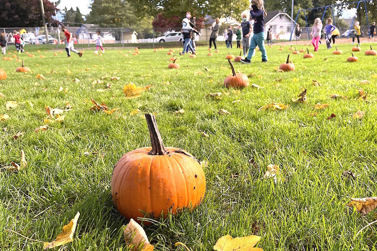 Pumpkin patch appeared like magic at Central elementary on Tuesday with a little help from the community. (Jennifer Feinberg/ Chilliwack Progress)